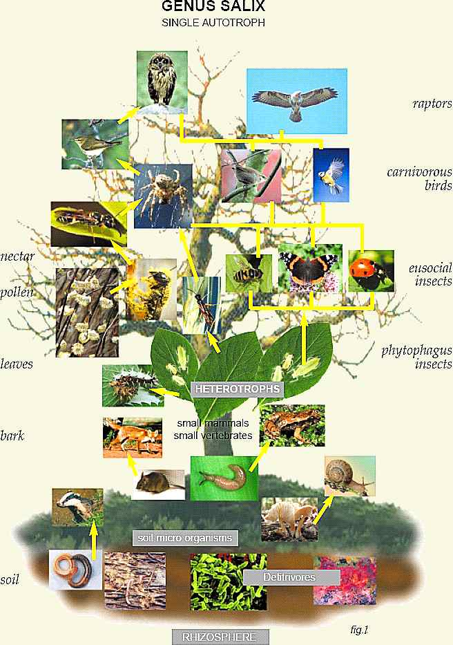 simple-forest-food-web