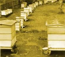 Paynes Southdown Bee Farm